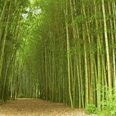 Materialkunde Bambus – der Alleskönner unter den Pflanzen