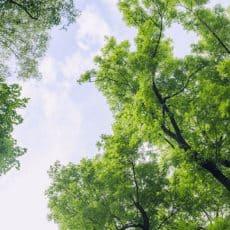 Greenwashing – was steckt hinter dem Phänomen?