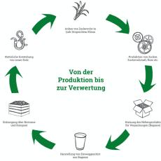 Vom Zuckerrohr zur Salatschale – Die Bagasse-Infografik von packVerde